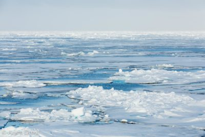 Pack ice north of Spitsbergen