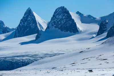 Polar Bear in Arctic landscape