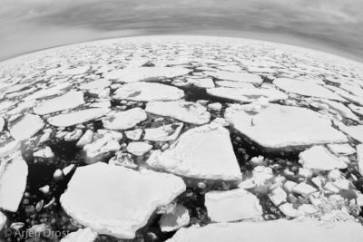 Pack ice at 83ºN, north of Spitsbergen